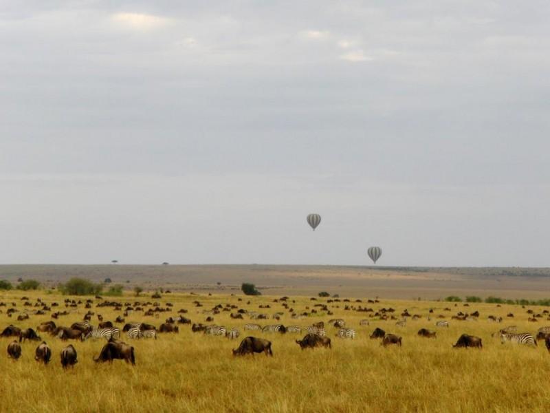 GREAT-MIGRATION-DIE-GROSSE-TIERWANDERUNG-BALLONSAFARI-IN-KENIA
