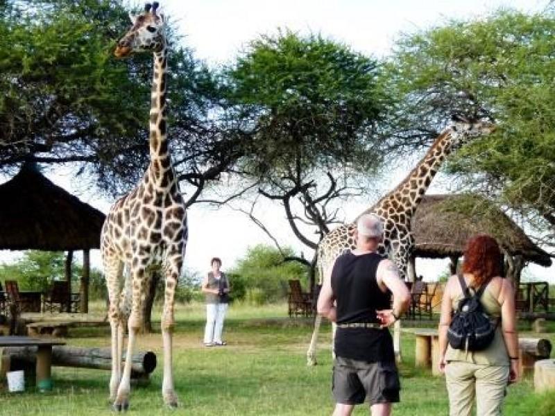 Abschlussabend-in-Kenia-Giraffenfuetterung-Gruppenreise