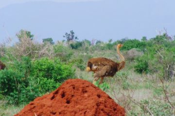 Freie Natur in Kenias Nationalparks, Tierbeobachtungen, auf Safari in Kenia, Reisen, Keniaurlaub