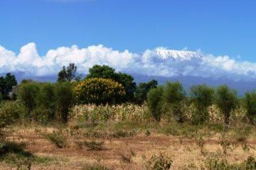 Kilimanjaro, Urlaub, Reisen in Kenia, Safari, Tierwelt