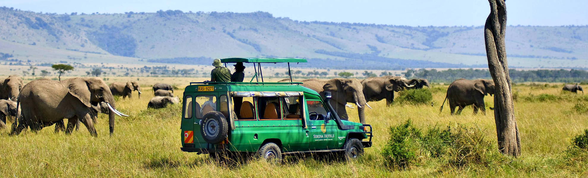 Elefanten auf einer Pirsch im Masai Mara Reservat