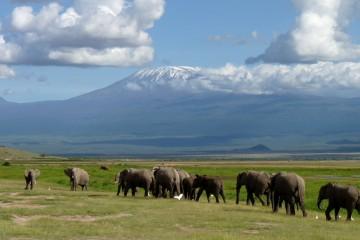 Video Kilimanjaro