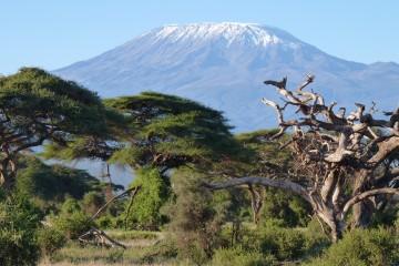 Kilimanjaro während einer Kenia Safari