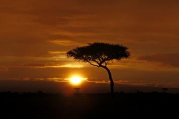 Sundowner in der Savanne im Masai Mara Reservat