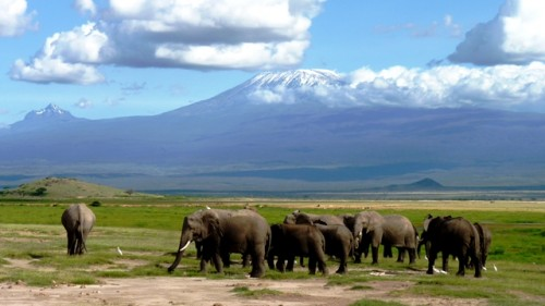 Privat Safari Elefantenparadies hautnah im Amboseli und Tsavo Ost