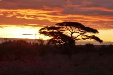 Colours of Amboseli Safari