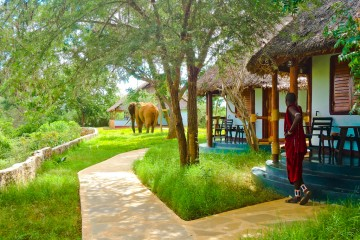 Bungalows mit Elefant in der Anlage des Crocodil Camps