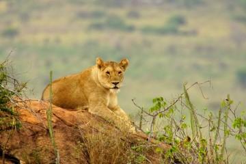 Safari Königreich der Tiere