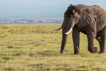Fotosafari Elefantenherden