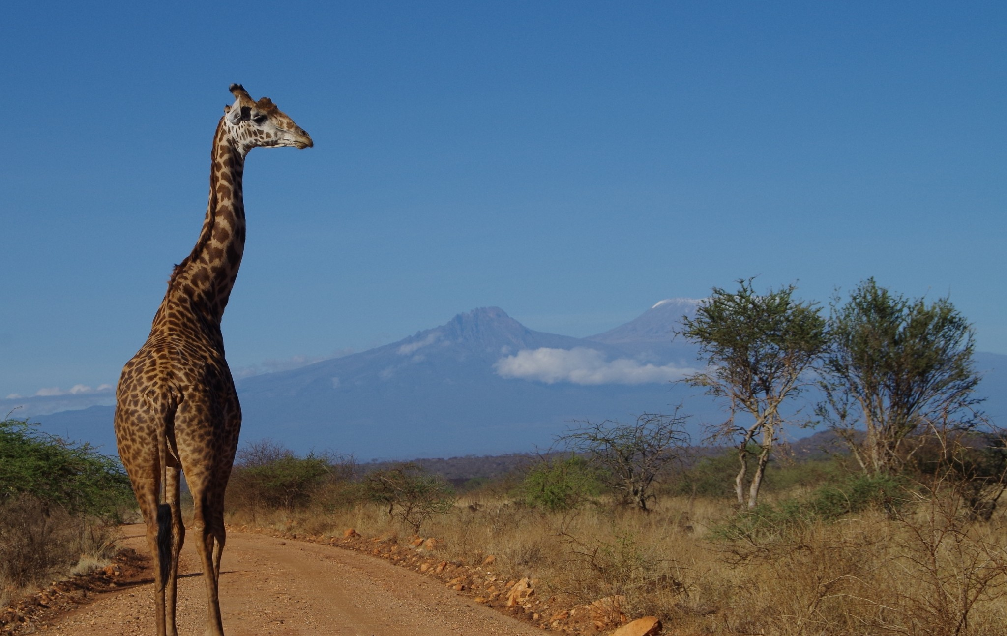 Safari Welcome to Kilimanjaro im Tsavo und Amboseli Nationalpark
