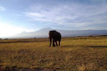 Begleitete Gruppenreise Wilde Tier Weites Land 2015