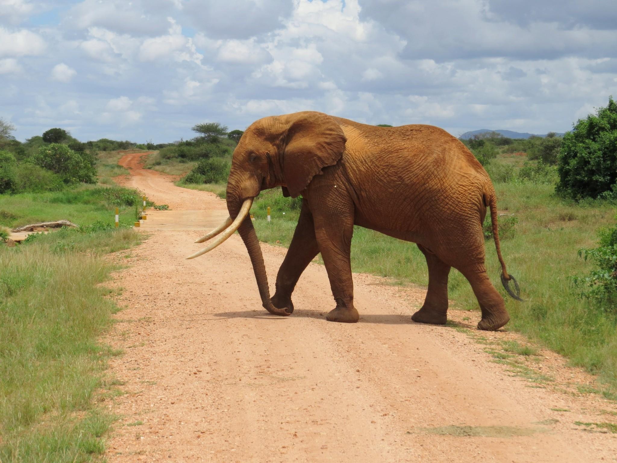 Safari Afrika zum Träumen