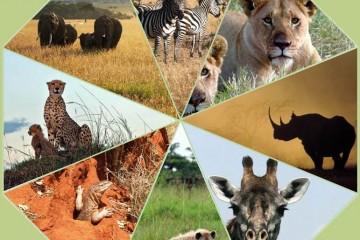 Safari Kaleidoskop der wilden Tiere