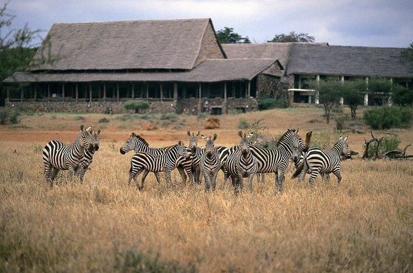 Tierbeobachtungen an der Kilaguni Serena Lodge