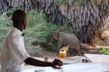 Besuch eines Elefanten nahe der Bar des Man Eaters Camp
