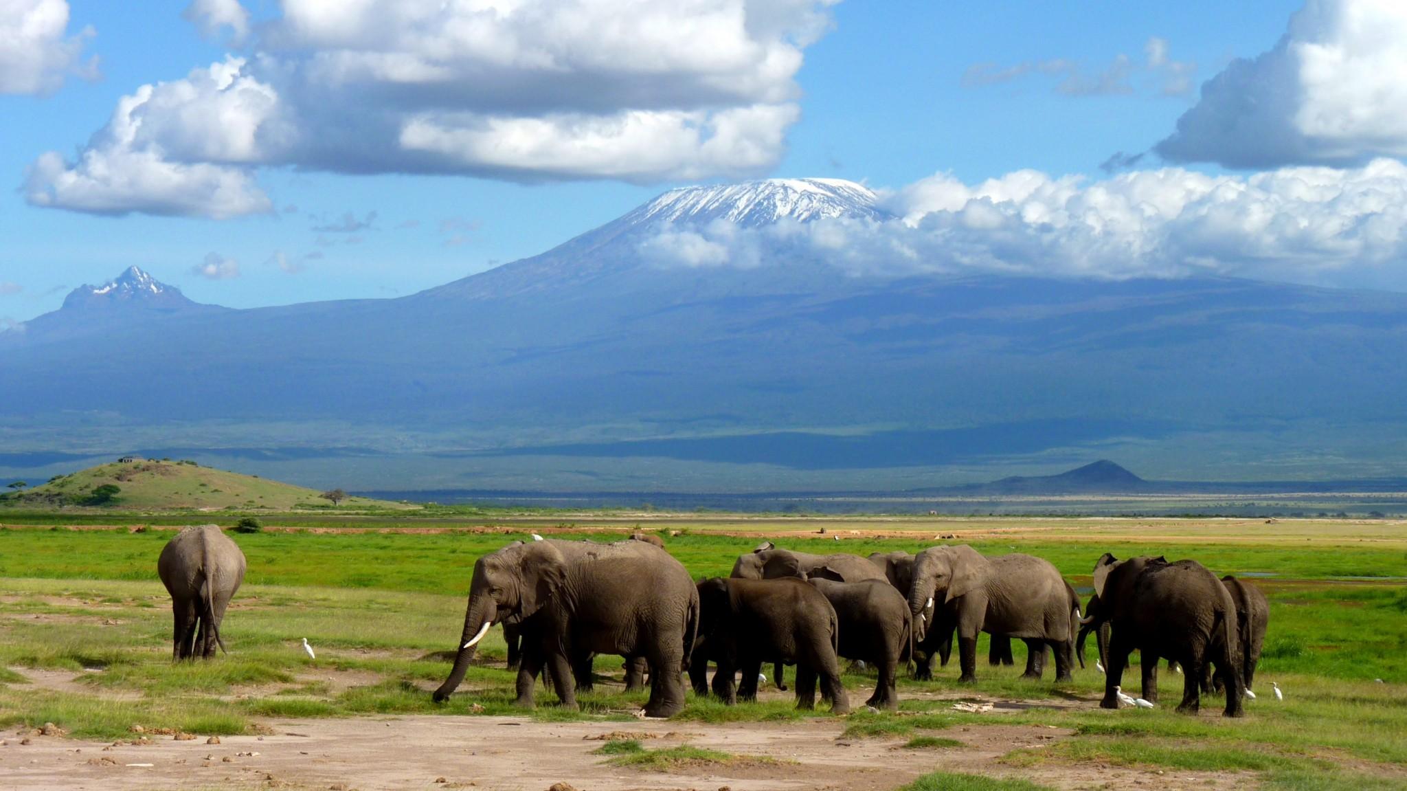 Elefantenherde am Fuße des Kilimanjaro