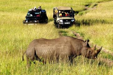 Nashorn im Masai Mara Reservat