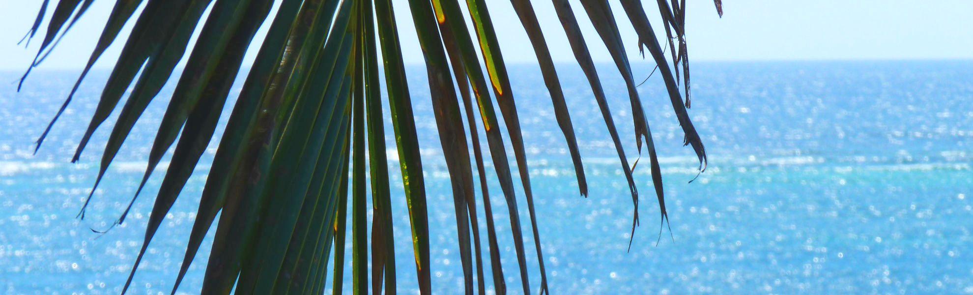 Palmenwedel über dem Indischen Ozean
