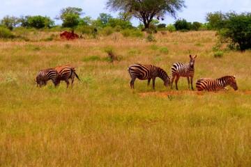 Begleitete Gruppenreise Kenia Afrikazauber