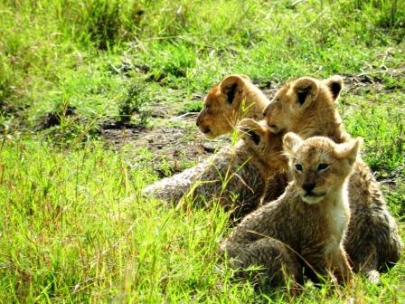 Safari Masai Mara compact