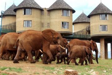 Elefanten am Wasserloch der Sarova Saltlick Game Lodge in Kenia