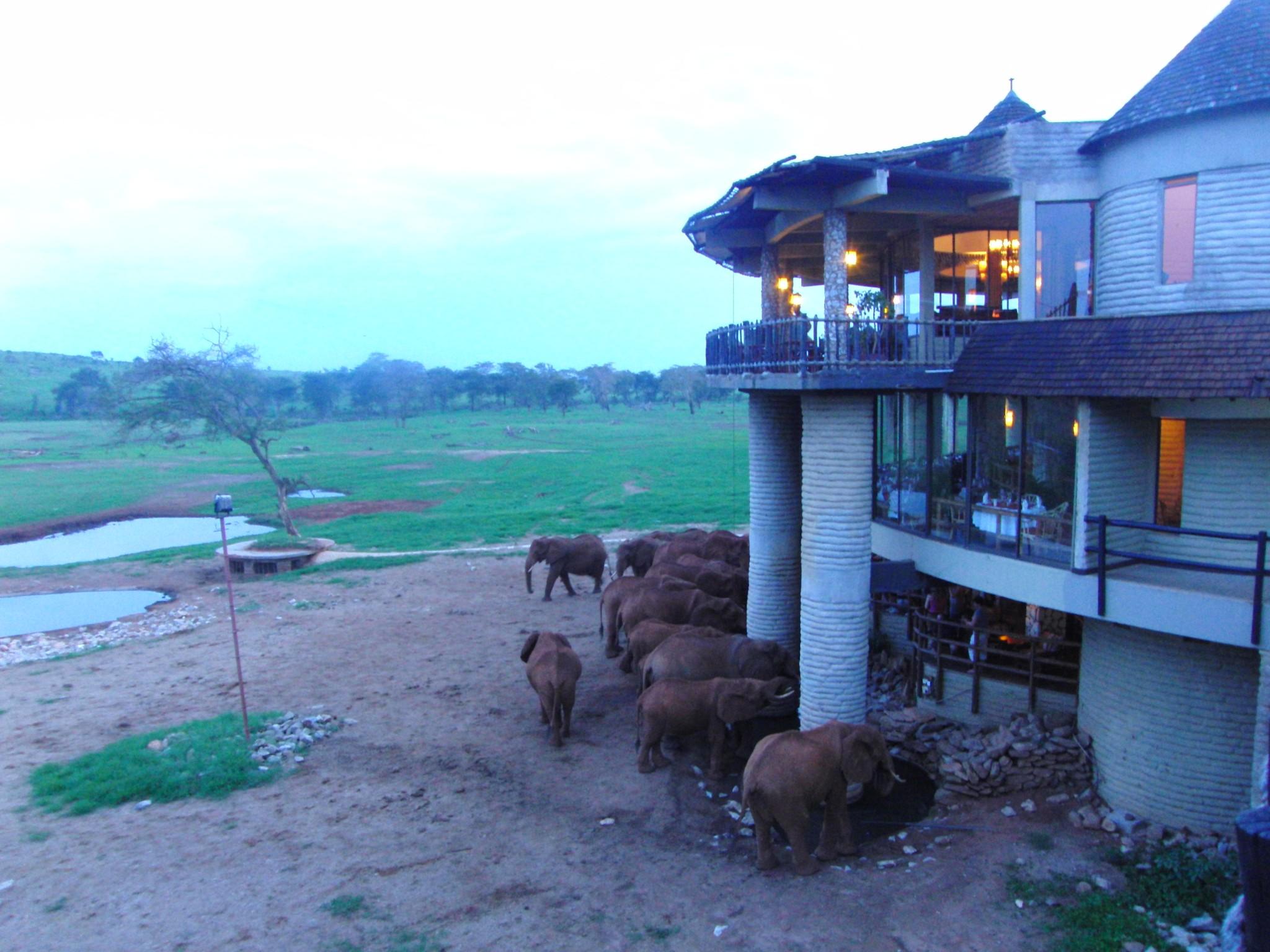 Elefanten in der Sarova-Saltlick-Game-Lodge-Taita-Hills-Schutzgebiet Keniasafari tour mit Keniaspezialist keniaurlaub.de Reisekontor Schmidt Leipzig
