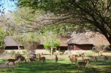 Antilopen im Garten des Satao Camp