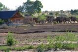 Elefanten in der Nähe eines Zeltes im Satao Camp