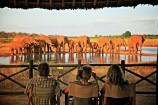 Blick auf Wasserloche mit Elefanten in der Voi Wildlife Lodge