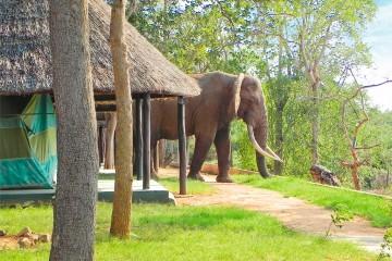 Elefant zu Besuch im Crocodile Camp