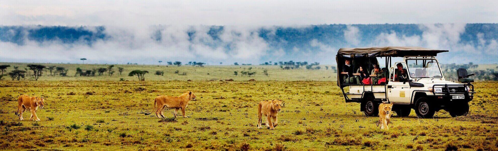 Löwen während einer Pirschfahrt im Masai Mara Reservat Kenia