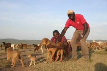 Tierärzte ohne Grenzen