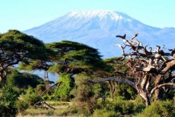 Amboseli Nationalpark in Kenia