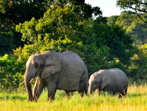 Samburu Reservat in Kenia