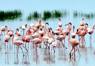Lake Nakuru Nationalpark in Kenia3