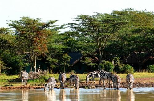 Sweetwaters Game Reservat in Kenia