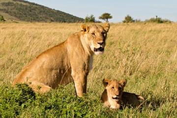 Große Kenia Safari