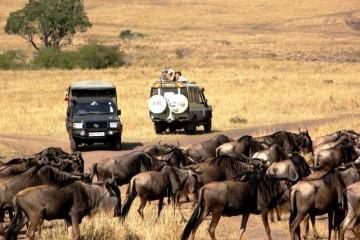 Kenia Reise Safari Tierwanderung Gnus