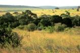 Marulabaum Elefantenbaum