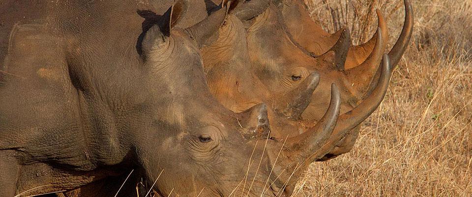 Privat Safari Im Reich der Nashörner
