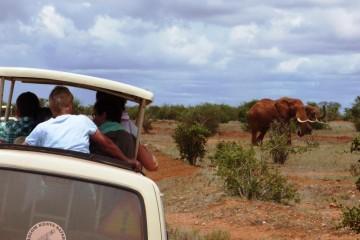 Safarimomente im Tsavo