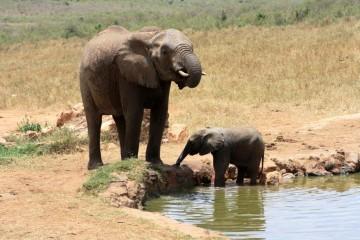 TV Tipp Wie denken Elefanten
