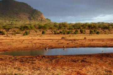 Auf-Safari-in-Kenia-Morgenstimmung-im-Tsavo-Nationalpark