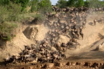 Große Migration Masai Mara