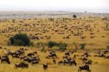 Masai Mara Safari - Great Migration - Große Tierwanderung in der Masai Mara in Kenia