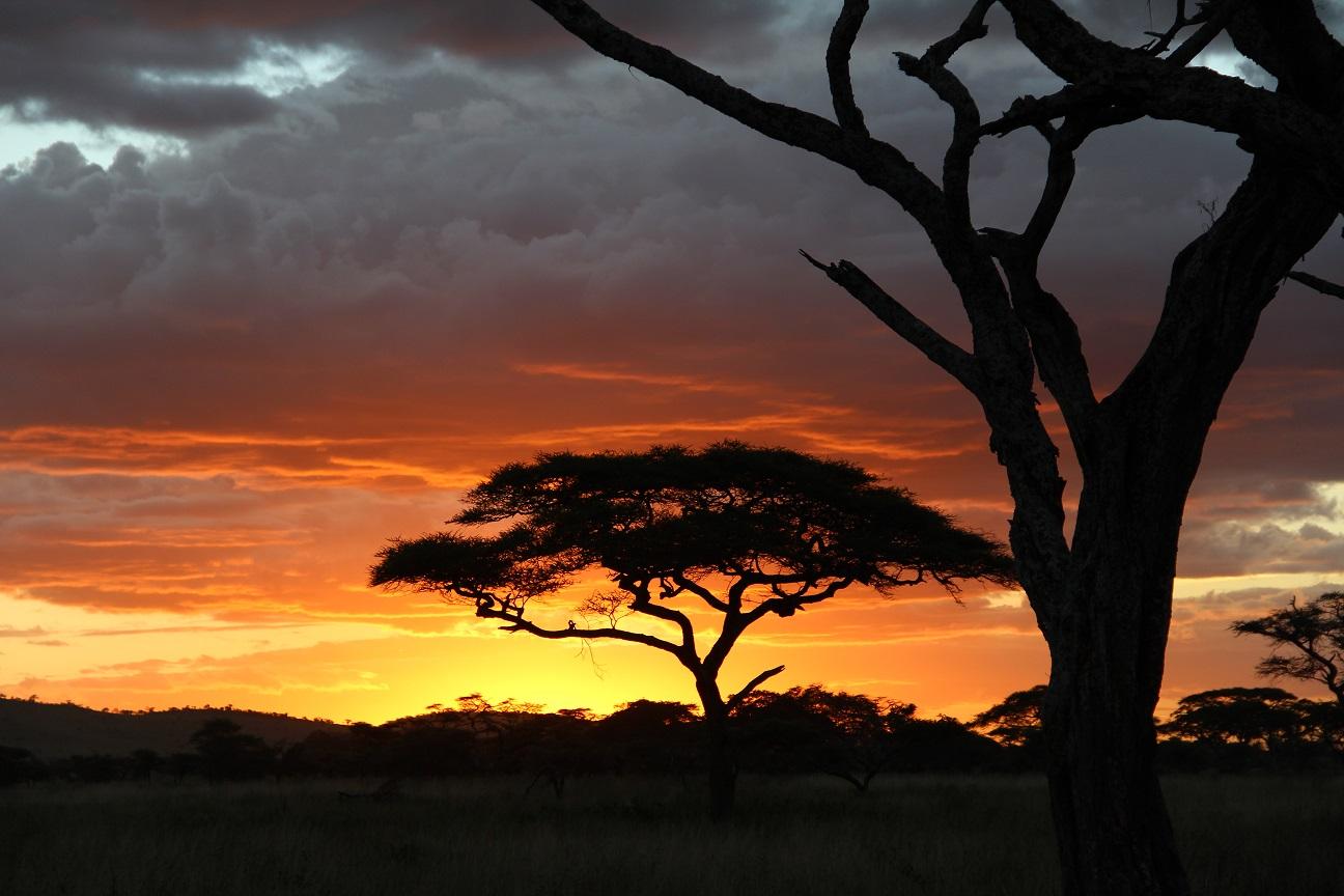 Kenia Safaritagebuch