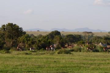 Safaritagebuch Wildlife