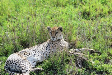 Safaritagebuch vier