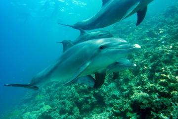 Delfine in Kenia