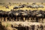 Kenia Gruppenreise Migration 2016